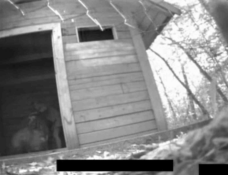 白人さんの野外排せつ盗撮vol.2 盗撮  68画像
